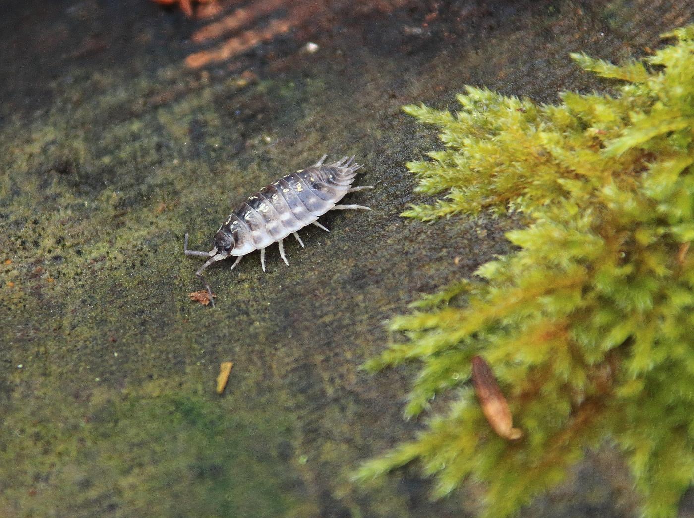 Cloporte : Tout savoir sur ce petit crustacé !  Gazon-magique.com