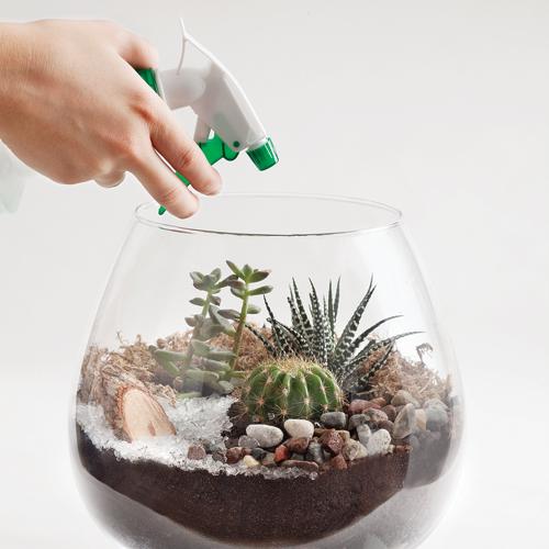 entretien terrarium