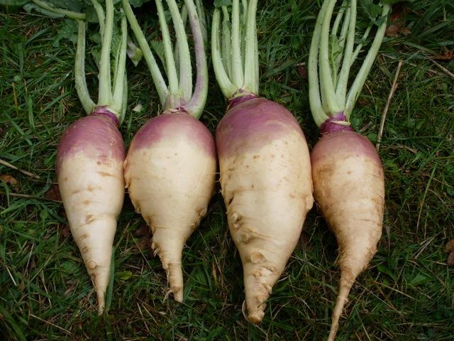 variété de rutabagas