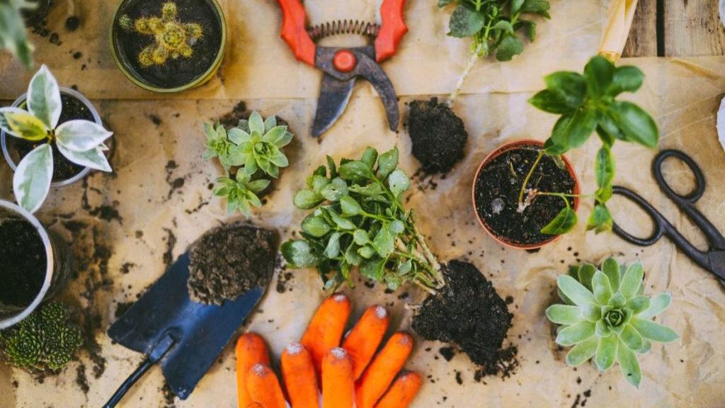 10 outils pour jardiner (votre dos vous dira merci) !