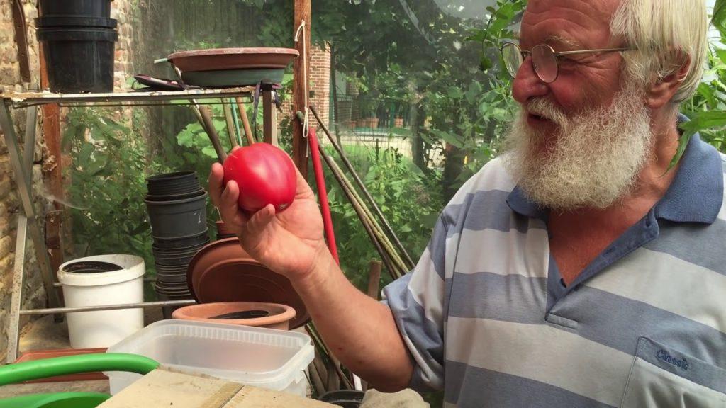 Astuces pour avoir de belles tomates