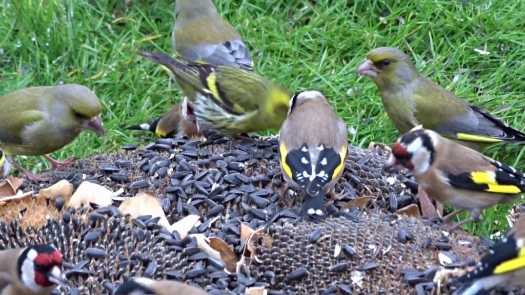 Petites astuces pour avoir plus d'oiseaux dans son jardin ...