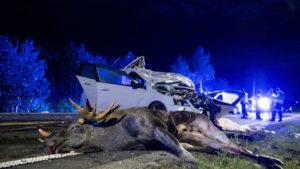 Accident animaux